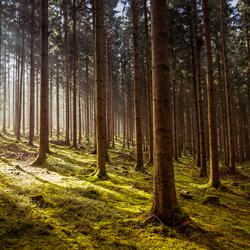 Lichtval in het Bos