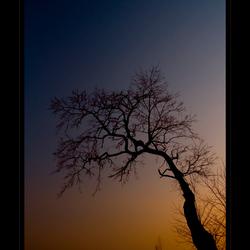 Yellow Sunset Tree
