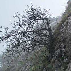 Motregen in de Picos de Europa