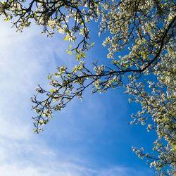 Blauwe lente lucht