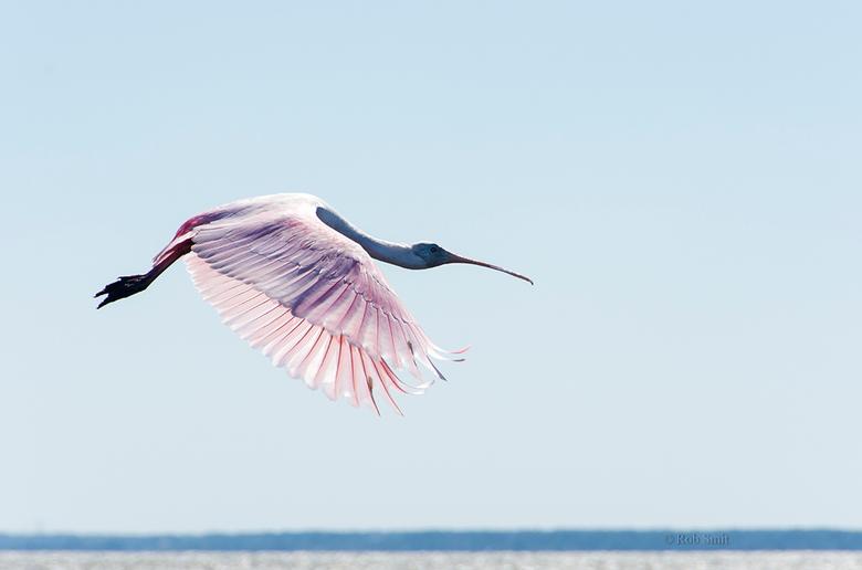 vleugelpracht take off