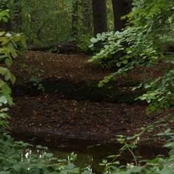 Foto wandeling landgoed fraeylemaborg