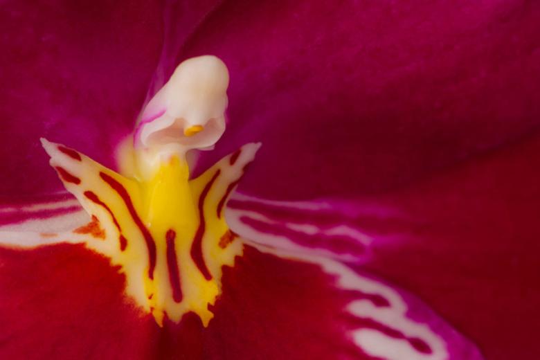 """Orchidee........... - Deze orchidee van zeer """"close""""  gefotografeerd,alleen toen bleek achteraf wel,wat je met het oog niet ziet,de structuu"""