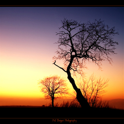 Sunset tree and silent sunset