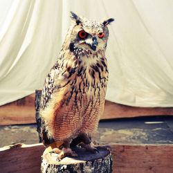 Be an owl