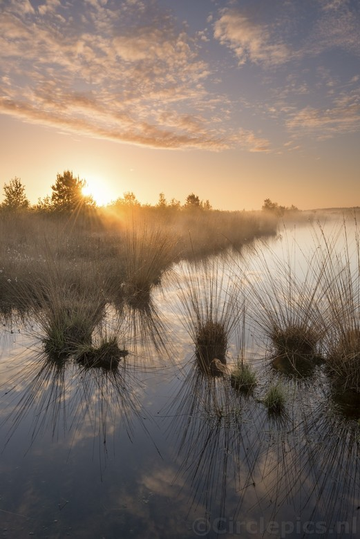 Bargerveen - Het Bargerveen in Drenthe, op een hele vroege ochtend begin mei. <br /> Tijdens onze grotendeels bewolkte vakantieweek in Drenthe werd e