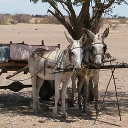 Taxi in de woestijn