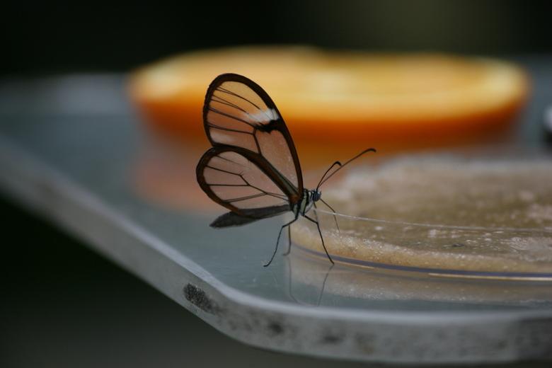 vlindertuin - vlindertuin
