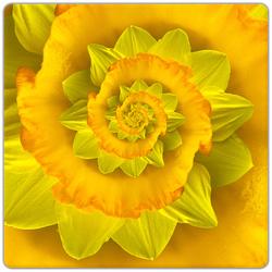 Narcis Spiral