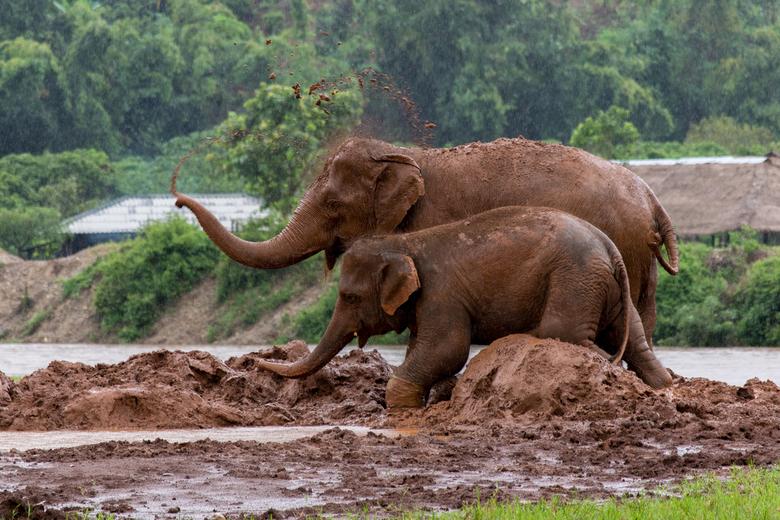 Elephant nature park - Thailand - Gemaakt in het elephant nature park in Thailand.