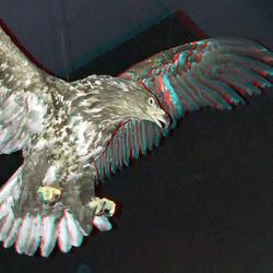 Naturalis Leiden 3D