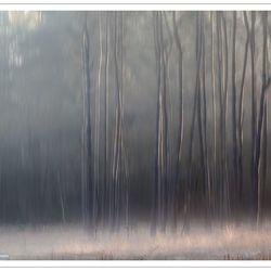Strakke bomen