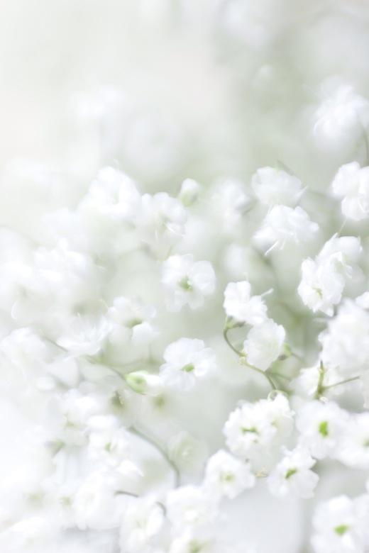 White magic -