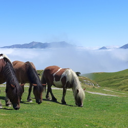 Horses in the Cloud