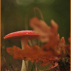 Kleurige herfst