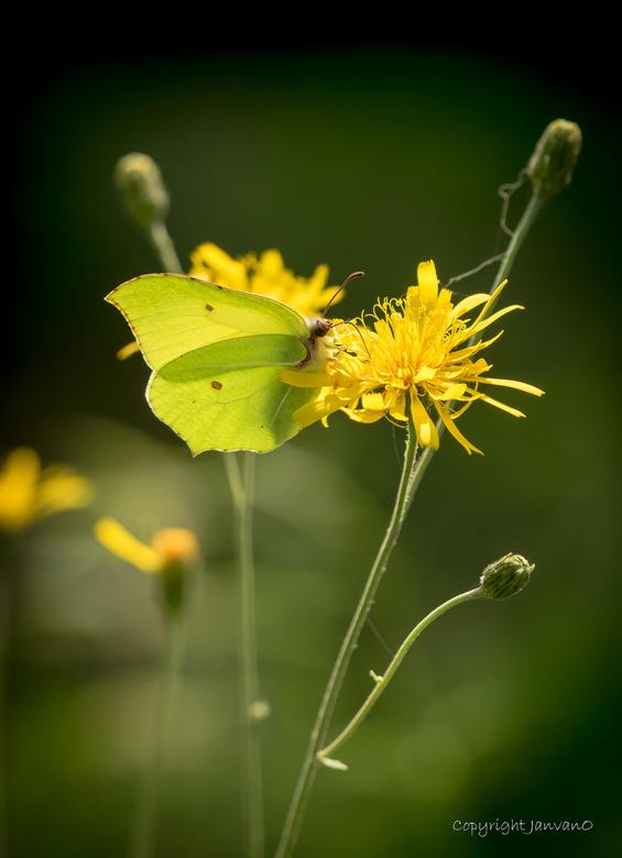 Yellow Summer - Van afgelopen augustus.