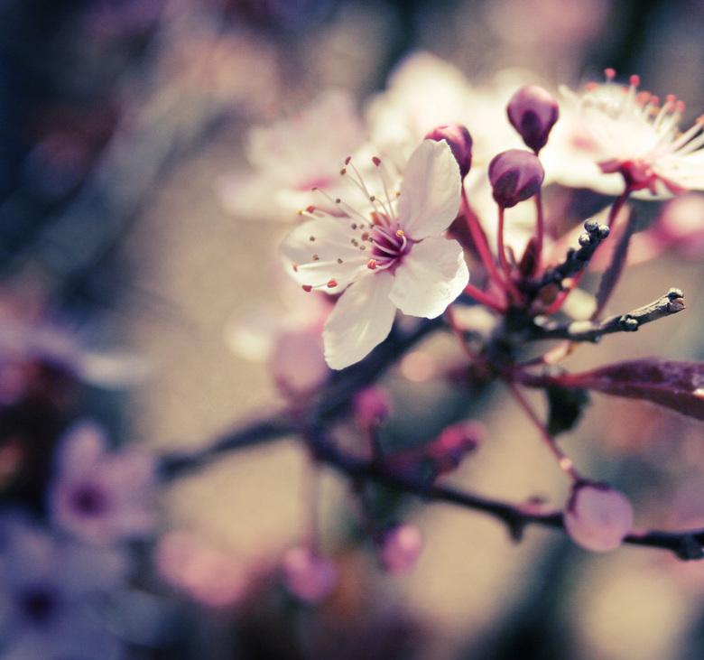 Blossom -