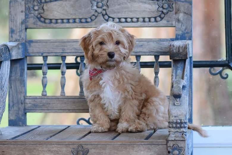 Model puppy - Het was nog spannend of de pup bleef zitten. Voor de foto hadden we de riem afgedaan.