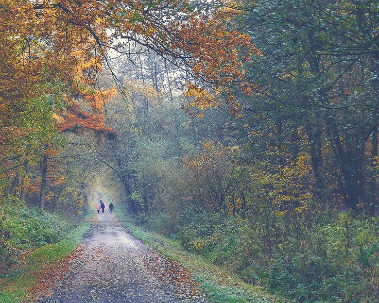 Memory lane - Gemaakt in oktober, in het Teutoburger Wald bij Bad Iburg.