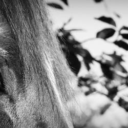 Paarden liegen nooit