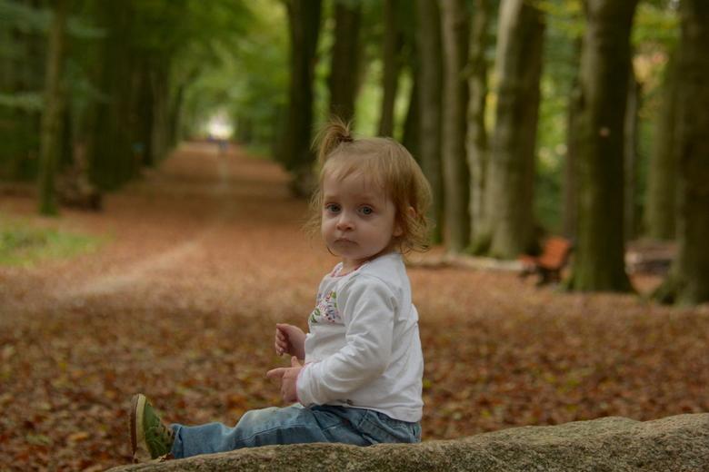 In het herfstbos