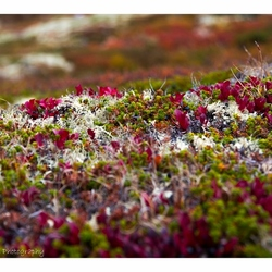 Colours in the mountains of Rondane