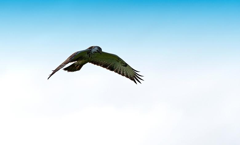 Zoeken naar een prooi - Eindelijk de kans gekregen om hem in de vlucht te kunnen fotograferen, ze blijven maar even kort hangen en zijn ze weer weg<br