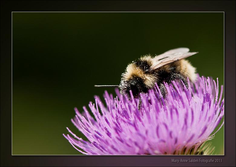&quot;Busy Bumblebee&quot; - Hallo allemaal,<br /> <br /> Zo lekker een zoomavondje gedaan...als eerste wil ik weer iedereen bedanken voor de fijne