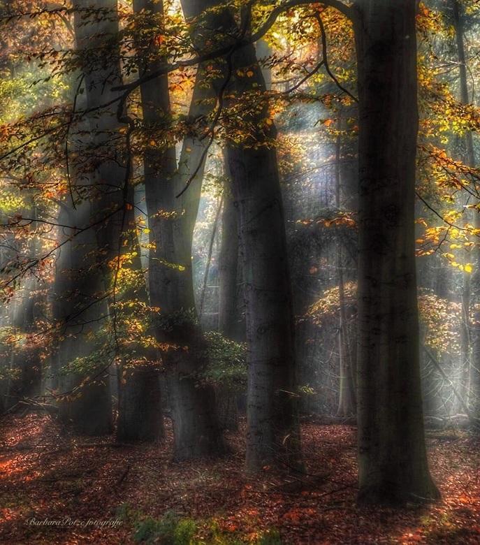 Zonnestralen in het bos -