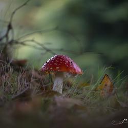 Just a Fairytail...