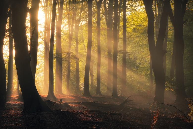 Rays for Dayz - We zitten weer in een prachtige periode voor landschaps- en natuurfotografie. Zo ook dit weekend waren de condities weer optimaal om h