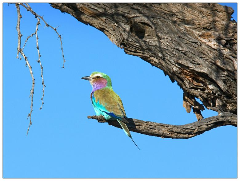 Namibië - Honingvogel