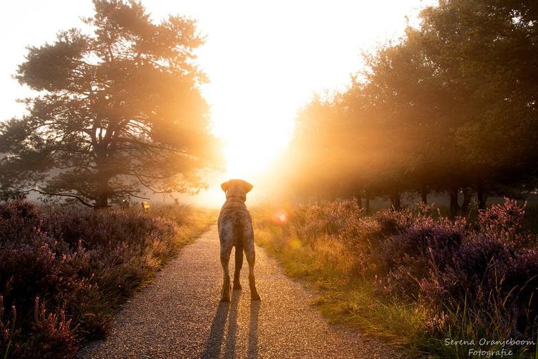 Kyro @ het gouden uurtje - Onze hond Kyro<br /> Arnhem Delhuyzen