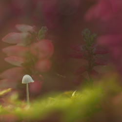 In nature dreams (project I)