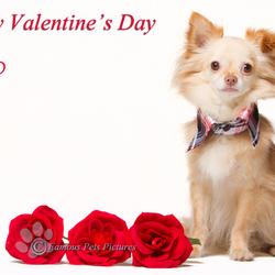 Divo 'Valentine's Day'