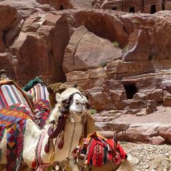 kamelen en rotsen 1505192322mw