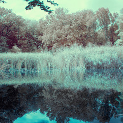The IR Pond