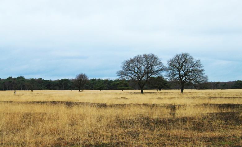 friese serengeti - Fries landschap met een heel buitenlandse sfeer...