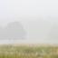 Pannenhoefse mist