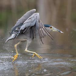 Lopen op het water