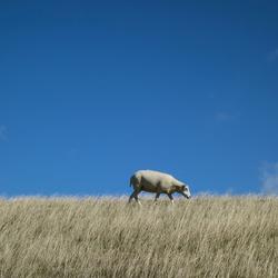 Het verloren schaap