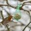 Kolibri allures
