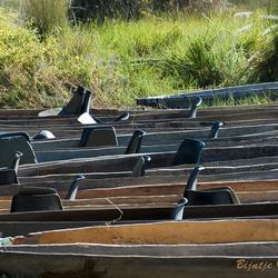 Bootjevaren in de Okavango delta