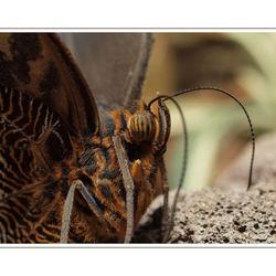 vlinder macro