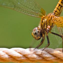 Libelle op touw!
