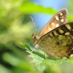 vlindertje  ....