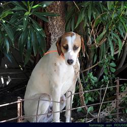 wachtende hond 1305176804mw.jpg
