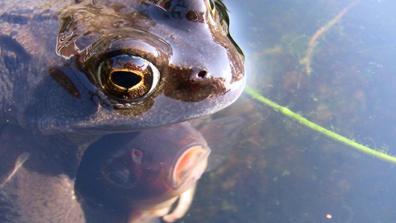 """Kikker met lentekriebels - Nu weet ik waar kikkervisjes vandaan komen <img  src=""""/images/smileys/smile-big.png""""/>"""