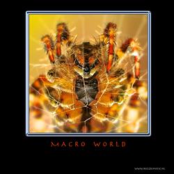 MACRO WORLD IV