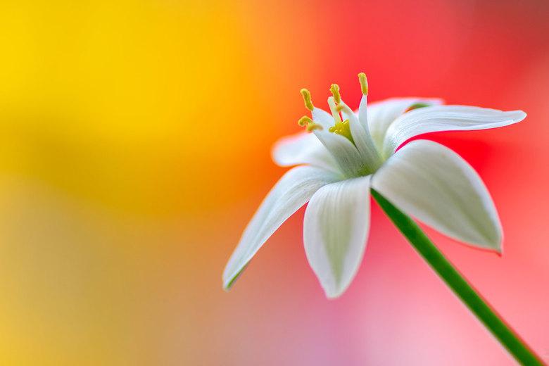 Happy colours - Macro foto van een bloemetje uit het park